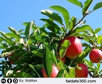 Potatura melo for Potatura del melo