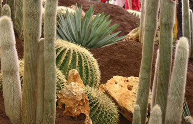 specie piante grasse
