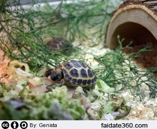 Terrario per tartarughe for Tartaruga di terra maschio o femmina
