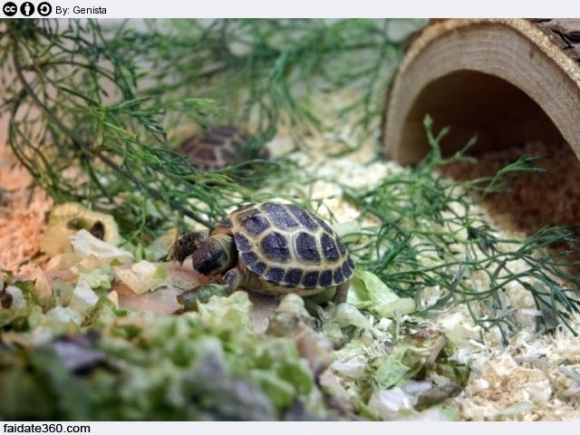 Terrario per tartarughe for Termoriscaldatore per tartarughe