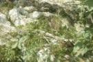 Terreno roccioso